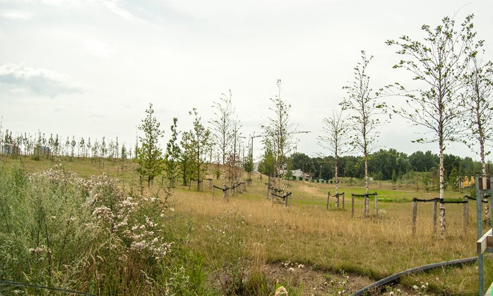 wadipark op duurzame site op Nieuw Zuid te Antwerpen
