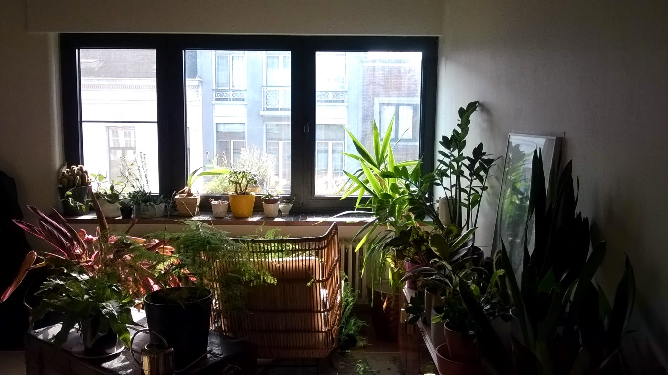 urban jungle in stadsappartement in Antwerpen