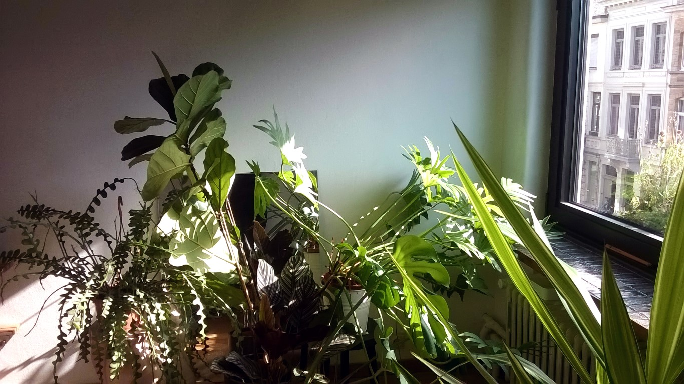Urban jungle in Antwerps appartement
