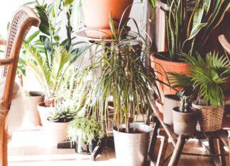 Urban jungle in apartement